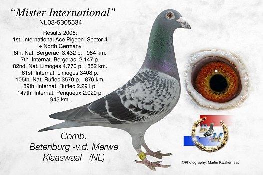Batenburg-Mister-Internationaal