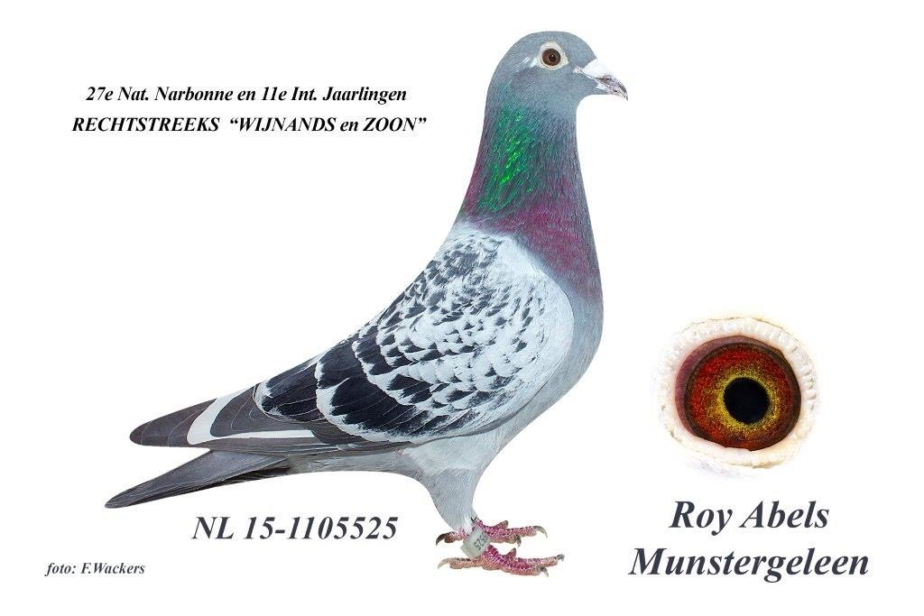 NL15-1105525
