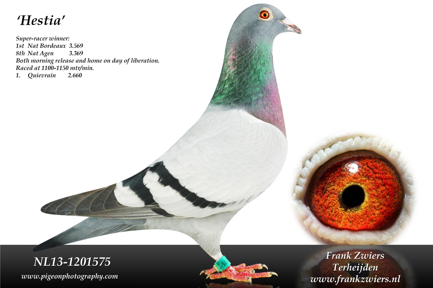 NL13-1201575_main