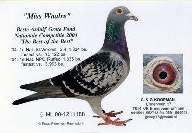 Miss-Waalre
