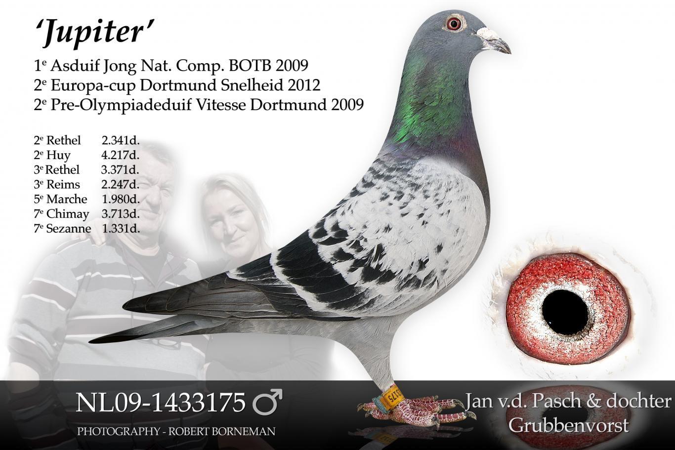 NL09-1433175