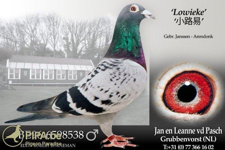 be96-6598538_lowieke_pasch_jan_van_de