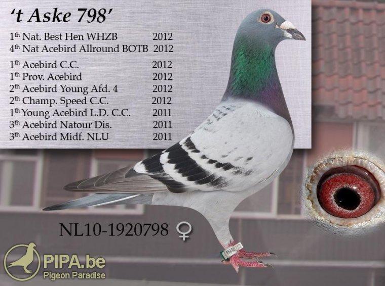 nl10-1920798_t_aske_798_pasch_jan_van_de