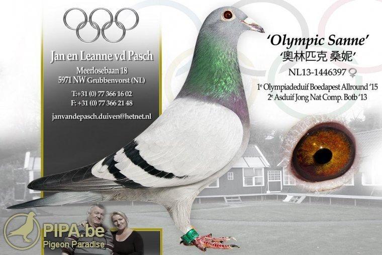 nl13-1446397_olympic_sanne_pasch_jan_van_de_bewerkt