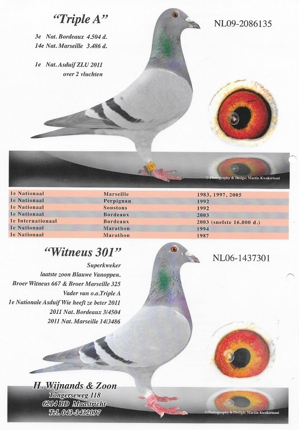 Witneus-301